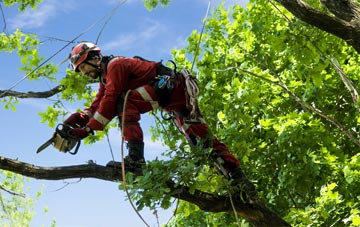 find trusted rated Sunderland tree surgeons