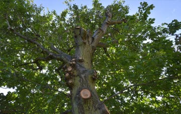 what is Sunderland tree surgery?