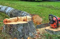 free Sunderland tree felling quotes